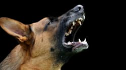 Aggressive Dogs In This B.C. District Now Need Photo