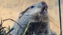 This Is How Often Groundhogs Get The Weather