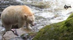 Un accord historique pour la protection des forêts canadiennes