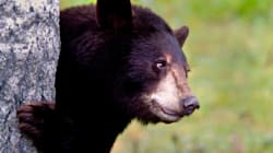 Bear Shot Dead Outside