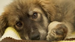 29 'Suffering' Animals Seized From Repeat Animal-Cruelty