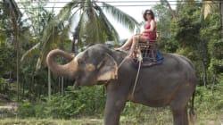 The 10 'Cruelest' Wildlife Tourism