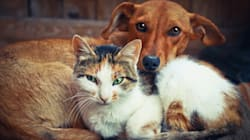 Chi ama di più gli esseri umani, i cani o i gatti? Ecco la