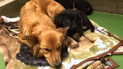Dog Breaks Out Of Her Kennel To Comfort Crying