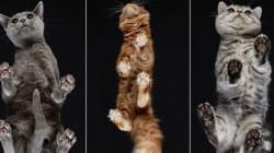 Il modo migliore per guardare un gatto? Su una