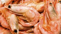 Pourquoi les crevettes deviennent roses à la