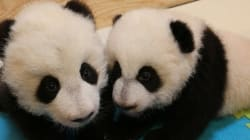 Now's Your Chance To Name A Giant Panda