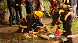 Firefighters Rescued This Pooch From A Burning House Just In