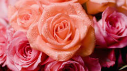 Enjoy Your Roses This Valentine's Day, Because They Are About To Get A Lot More