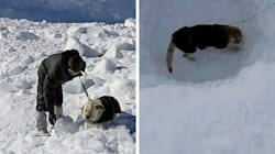 Siachen Avalanche: Meet The Canines Who, Along With 150 Soldiers, Helped Rescue Lone