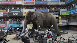 Rampaging Elephant In Siliguri Damages Over 40 Houses, Cars In 7