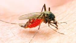 Une épidémie de Zika dans le sud de la France? C'est a priori