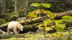 The Science Behind The Great Bear Rainforest