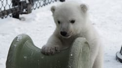 Toronto's Polar Bear Cub Shows The Rest Of Us How To Enjoy