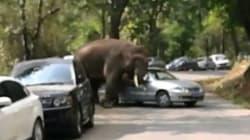 Après un chagrin d'amour, un éléphant détruit 19 voitures de