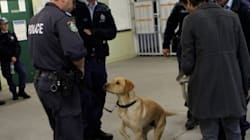 Push To Outlaw Sniffer Dogs Which Give False Positives '3 In 4