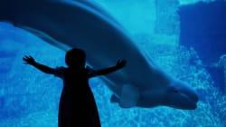 Vancouver Aquarium Launches Lawsuit Over Critical