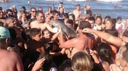 Endangered Dolphin Dies After Being Passed Around For
