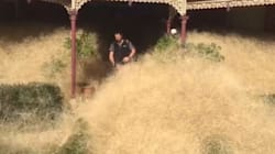 It's A Hairy Panic: Tumbleweeds Engulf Aussie Country