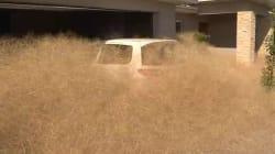 La mauvaise herbe envahit cette ville australienne