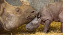 We Really Just Want To Hug Toronto Zoo's Newest Baby