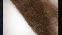 La mèche de cheveux de quel chanteur a été vendue 35 000$