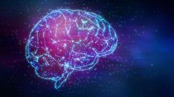脳がある最古の動物はサメではなかった。新研究で明らかに