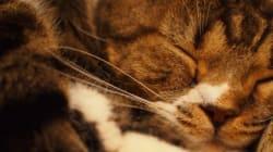 2月22日は猫の日だって知ってましたか?(画像集)