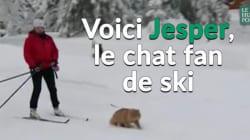 VIDÉO - Jesper, le chat de