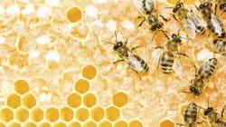 Eureka 89 Restaurant Creates Honey Degustation For 2016 Melbourne Food And Wine