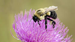 We Should Love Bees, Especially The Wild