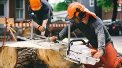 Ils recyclent les arbres malades pour en faire du mobilier inusité