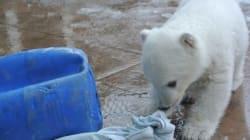 La petite ourse polaire du zoo de Toronto a un nom