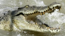 NT Government Looking For Someone To Take 250 Crocs Off Its