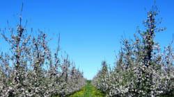 En mars, c'est le moment de planter les poires de