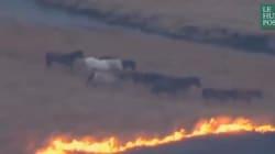 Des chevaux échappent à un incendie