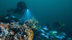 Five 'Drowned Apostles' Discovered Off The Great Ocean