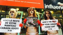 PETA manifeste contre Canada Goose à