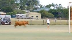 Un taureau charge de jeunes joueurs de