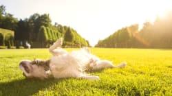 24 Animals Enjoying Spring.. Just Like