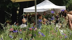I festival più petalosi dell'anno. E 5 giardini da visitare
