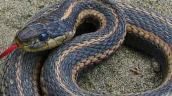 This St. Patrick's Day, Try Celebrating Snake Patrick's