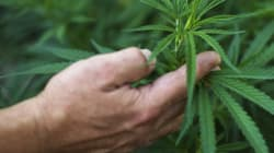 Don't Wait To Overgrow Canada's Unjust Marijuana