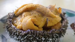 LOL As You Watch Americans Try Eating Sea Urchin For The First