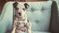 Adorable Animals You Need To Follow On Instagram Right
