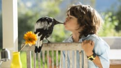 How A Plucky Magpie Chick Became A Symbol Of Hope For An Australian