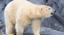 What's A Polar Bear's Life Worth,