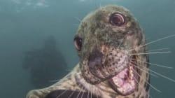 Ce phoque souriant a remporté le concours «Underwater Photography»