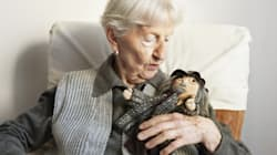 Showing Compassion: Doll Therapy And