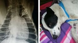 Pups Shot With Arrows In Alberta Fighting For